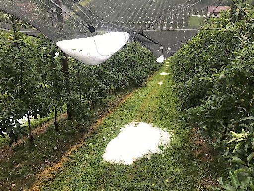 Obst unter Netz