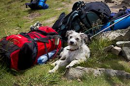 Mit dem Hund auf Urlaub: Das ist zu beachten