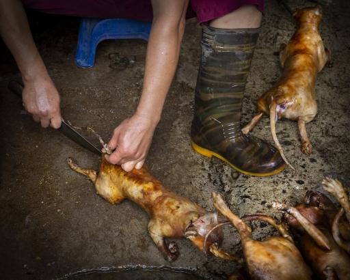 Katzen - in Vietnam leider öfters am Speiseplan