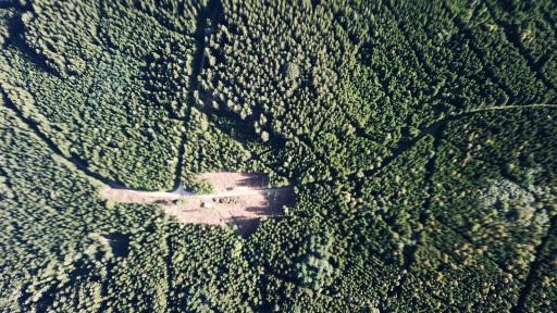 DCIM\100MEDIA\DJI_0071.JPG Rodung für eine geplante Windkraftanlage in Sallingberg- Konflikt mit Naturschutz wegen nachgewiesenem Schwarzstorchbrutplatz