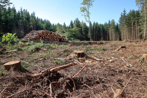 gerodete Waldfläche in Sallingberg - geplantes Windkraftprojekt steht im Konflikt mit Naturschutzgesetzen aufgrund nachgewiesenem Schwarzstorchhorst.