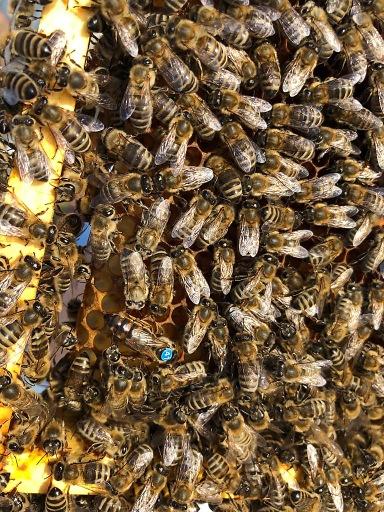 Bienen auf dem Firmendach: Wienerberger schafft neuen Lebensraum