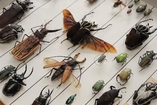 Detail aus der Käfersammlung