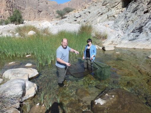 Sandra Kirchner (Wissenschaftliche Mitarbeiterin) und Robert Illek (Leiter der Zoologischen Hauptpräparation) erforschen neue Wüstenfisch-Arten in Oman.