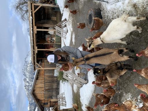 Julia Hölzl im mobilen Gehege mit Ziegen und Hennen