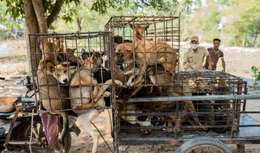 Die Hunde waren in Käfige eingepfercht - ein grauenvolles Bild