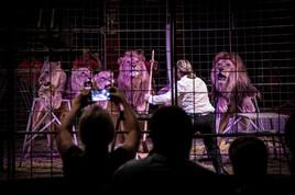 VIER PFOTEN fordert EU-weites Verbot von Wildtieren in Zirkussen