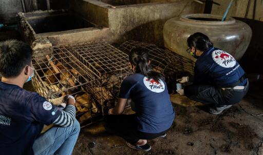 Das VIER PFOTEN Team befreite die Hunde aus ihren Käfigen
