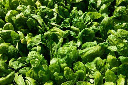 Für fast ein Drittel der Österreicher hat Spinat am Gründonnerstag Tradition.