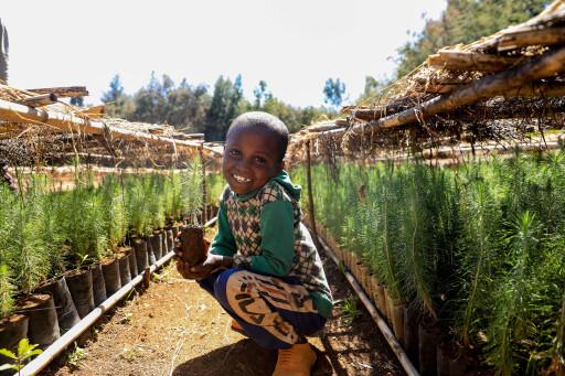 710 Baumschulen hat Menschen für Menschen in Äthiopien in den vergangenen 40 Jahren eingerichtet, in denen unter anderem Baumsetzlinge zur Aufforstung und Wiederbewaldung aufgezogen werden.
