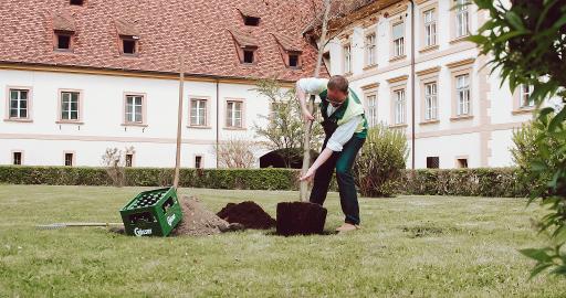 Bei der Baumpflanzung achtete Braumeister Markus Baumann höchstpersönlich auf den optimalen Standort für die Buche.