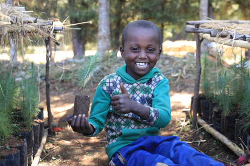 """Die UnterstützerInnen von Menschen für Menschen ermöglichten im Rahmen der Umweltaktion """"Waldwette"""" in nur 4 Wochen die Aufforstung von über 91.500 m² Wald in Äthiopien."""