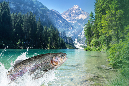 heimischer Fisch in klarem Tiroler Wasser