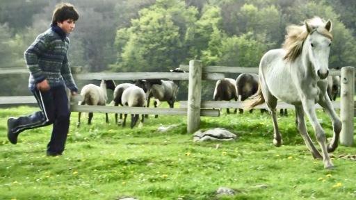 Jean (Jean-Francois Pignon), Pferd Gazelle (v.l.) / Weiterer Text über ots und www.presseportal.de/nr/55188 / Die Verwendung dieses Bildes ist für redaktionelle Zwecke unter Beachtung ggf. genannter Nutzungsbedingungen honorarfrei. Veröffentlichung bitte mit Bildrechte-Hinweis.