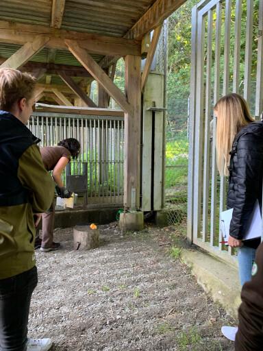 Das Team von Parkside Interactive beobachtet die Medikamentengabe für die Tiere, um die Software auf die Arbeitsweise der Tierpflegerinnen und Tierpfleger hin anpassen zu können.