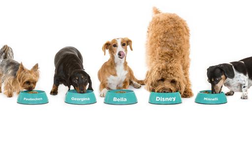 Hunde fressen individuelles Futter